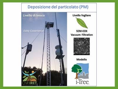 Quanto PM rimuovono gli alberi e le foreste urbane? Sono affidabili le stime dei modelli? Un nuovo studio condotto dal CNR-IRET ha messo a confronto il modello i-Tree Eco con misure sperimentali a diversa scala